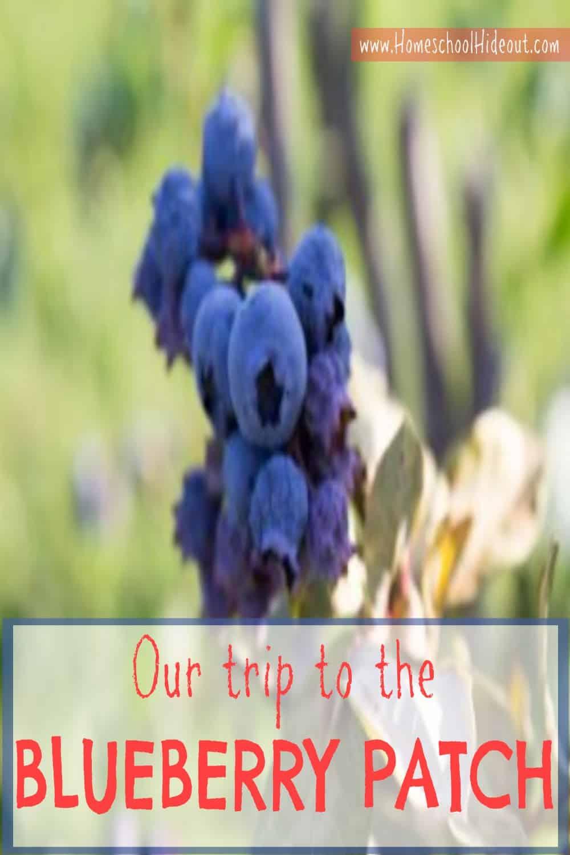 blueberry patch field trip